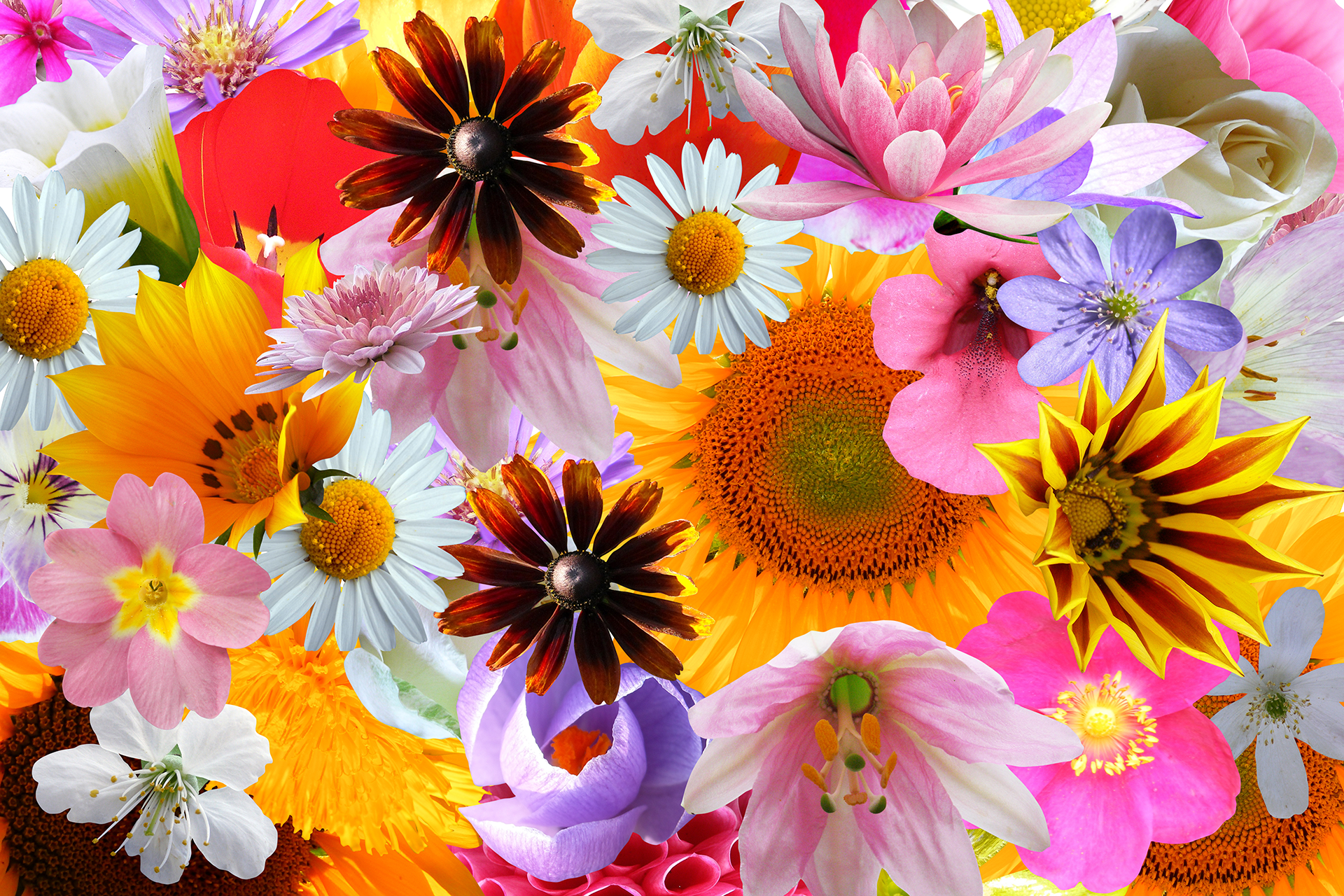 Colorful Flower Background 1 - Orange and Gold and Pink